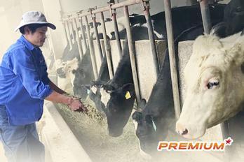 Ngành chăn nuôi thua lỗ ít nhất 80.000 tỉ đồng