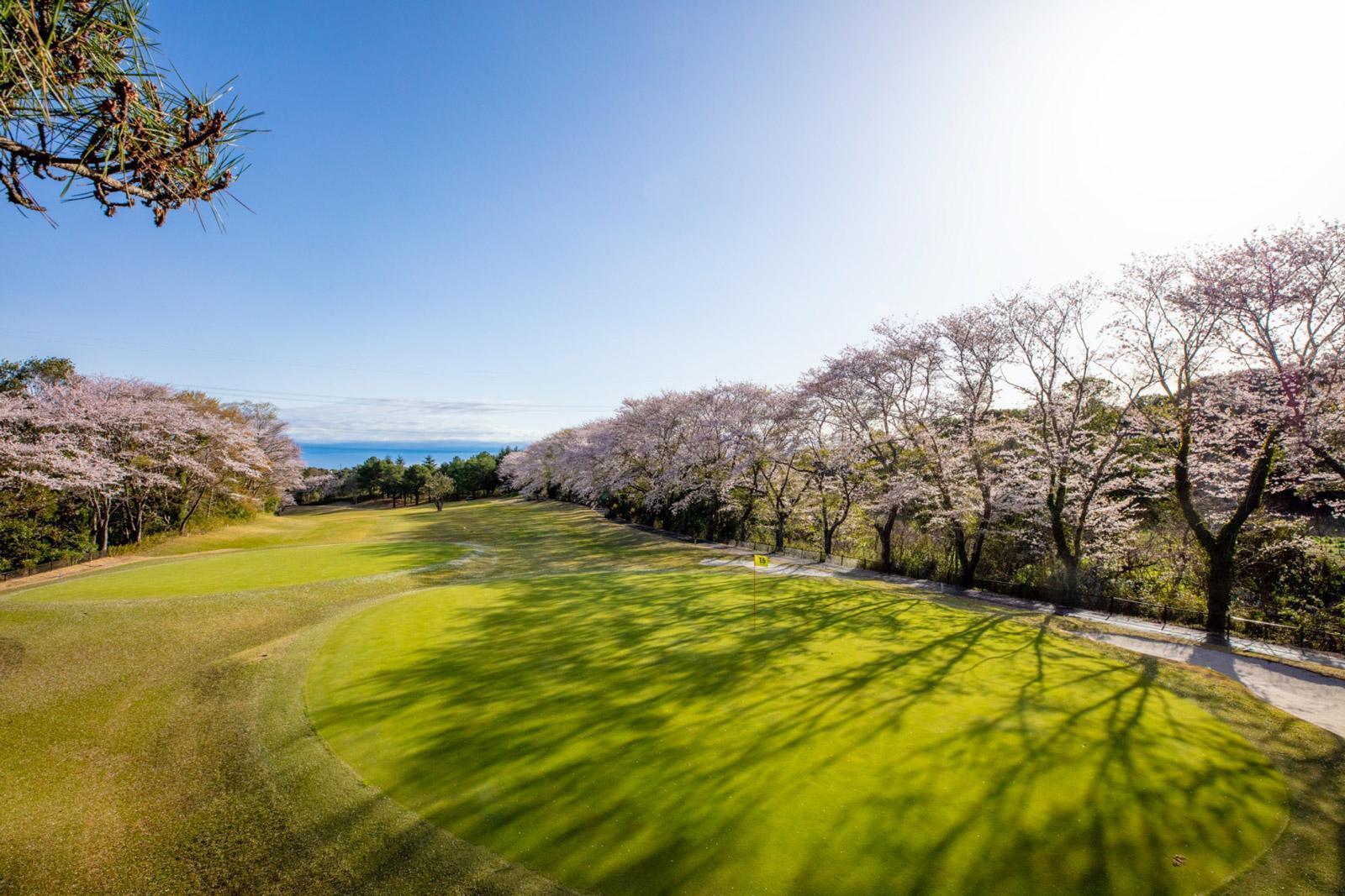 Hideki Matsuyama, chiến thắng đỉnh cao của golf Nhật Bản-3