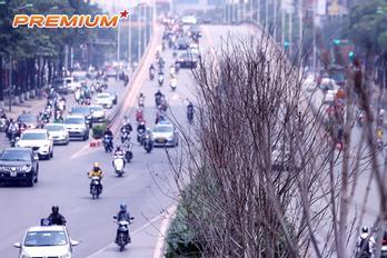 Cây ngoại nhập về Hà Nội
