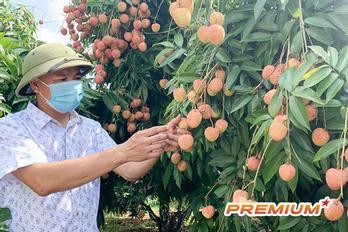Vải thiều thắng lớn gợi mở cuộc cách mạng nông nghiệp