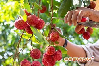Nông sản Việt gây sốt chợ toàn cầu